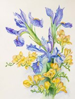 Iris With Gold Fuscia by Joanne Porter - various sizes