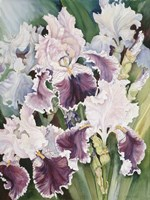 Ruffled Burgundy Iris' by Joanne Porter - various sizes