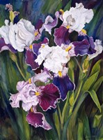 Wind Blown Iris Fine Art Print