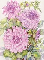 Lavender Dahlias Fine Art Print