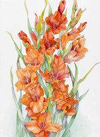 Hot Orange Gladiolus Fine Art Print