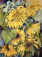 Cascading Sunflowers Fine Art Print