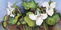 Woodland Trillium A Fine Art Print