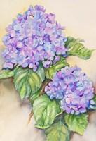 Hydrangea Stem by Joanne Porter - various sizes