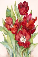 Tulips Opening Up by Joanne Porter - various sizes