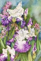 Iris Garden by Joanne Porter - various sizes, FulcrumGallery.com brand