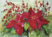 Red Poinsettia Fine Art Print