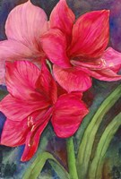 Betty's Amaryllis by Joanne Porter - various sizes