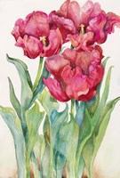 Cherry Red Tulip by Joanne Porter - various sizes - $23.99