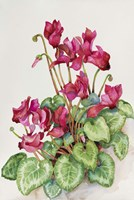 Red Cyclamen by Joanne Porter - various sizes, FulcrumGallery.com brand