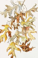 Rust Colored Oak Leaves Fine Art Print