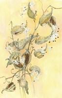 Milkweed Fine Art Print
