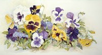 Pansies In Yellow- Purple Fine Art Print