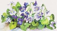 Violets Fine Art Print