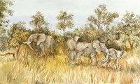 African Elephant by Joanne Porter - various sizes