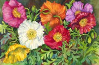 Iceland Poppies by Joanne Porter - various sizes - $30.49