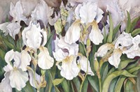 Field Of Iris by Joanne Porter - various sizes