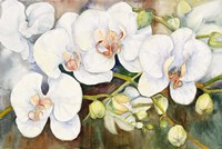 Stem Of Orchids Fine Art Print
