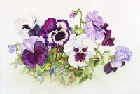 White and Purple Pansies II Fine Art Print