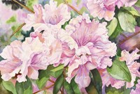 Sun Lit Azalea Fine Art Print