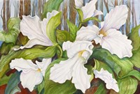 Woodland Trillium by Joanne Porter - various sizes, FulcrumGallery.com brand