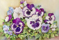Pansy Cluster Fine Art Print