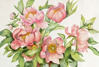 Peony Spray by Joanne Porter - various sizes - $30.99