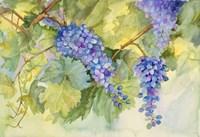 Grape Vineyard by Joanne Porter - various sizes