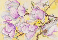 Tulip Tree by Joanne Porter - various sizes