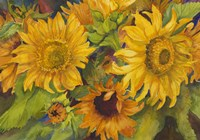 Sunny Faces by Joanne Porter - various sizes - $28.49