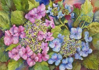 Lacy Hydrangea by Joanne Porter - various sizes