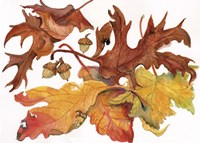 Leaves And Acorns by Joanne Porter - various sizes