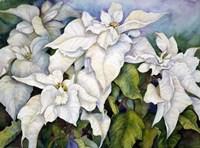 White Poinsettia by Joanne Porter - various sizes