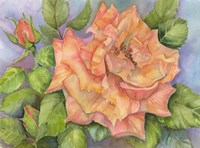 Peach Blush Rose Fine Art Print