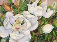 Magnolia Tree Fine Art Print