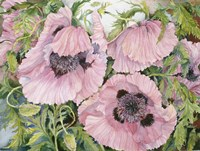 Pink Poppies by Joanne Porter - various sizes