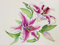 A Study Of Lilies by Joanne Porter - various sizes - $29.99