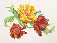 Twining Tulips by Joanne Porter - various sizes