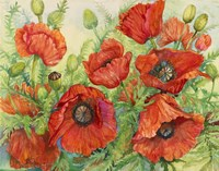 Poppies at their Peak by Joanne Porter - various sizes
