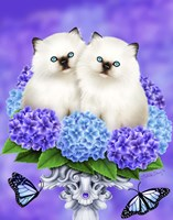 The Cats of Spring Framed Print