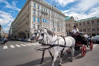 Horse Drawn Carriage in Vienna Fine Art Print