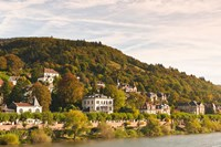 Horses at Neckar River in Germany by Michael DeFreitas - various sizes