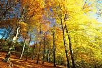 Autumn Leaves of Trees Fine Art Print