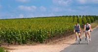 Cyclists in Vineyards of Cote des Blancs Fine Art Print