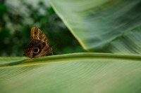 Butterfly on a Leaf Fine Art Print
