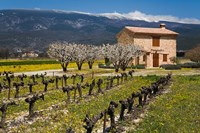 Stone House and Vineyard, Mt Ventoux Fine Art Print