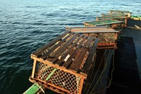 Nova Scotia, Cape Breton, Lobster Traps Fine Art Print