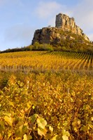 Roche de Solutre above Vineyards, France Fine Art Print