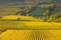 Autumn Morning in Pouilly-Fuiss' Vineyards Fine Art Print