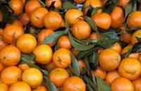 Oranges, Nasch Market, Austria Fine Art Print